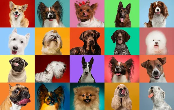 A collage of many dogs with a colorful background.