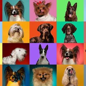 Dog Breed Identification