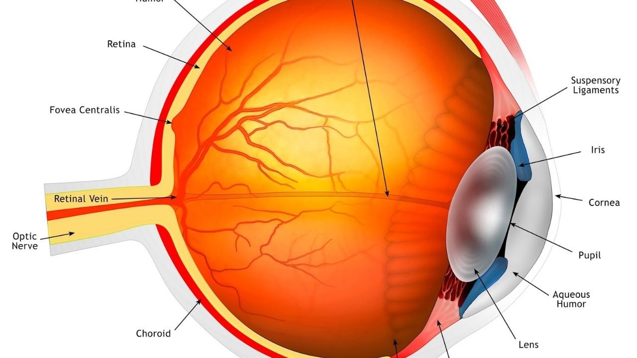 Eye anatomy sketch.