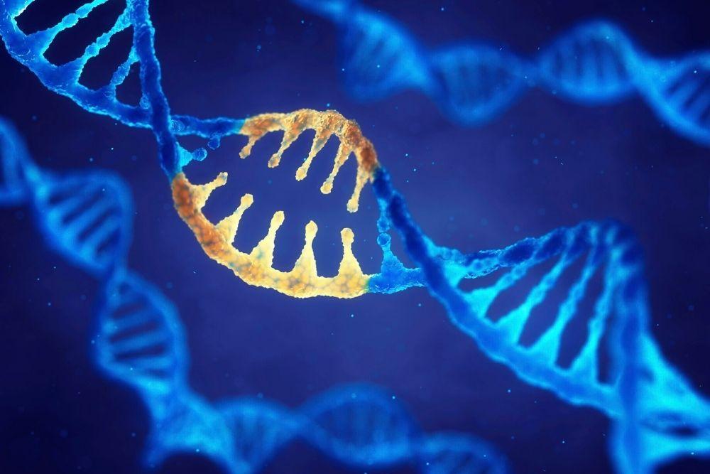Illustration of the human genome