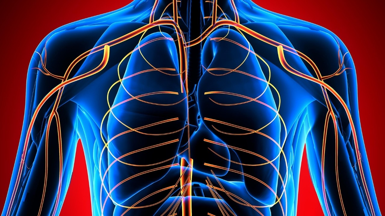 Human body - upper body systems.